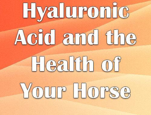 Hyaluronic Acid and the Health of Your Horse